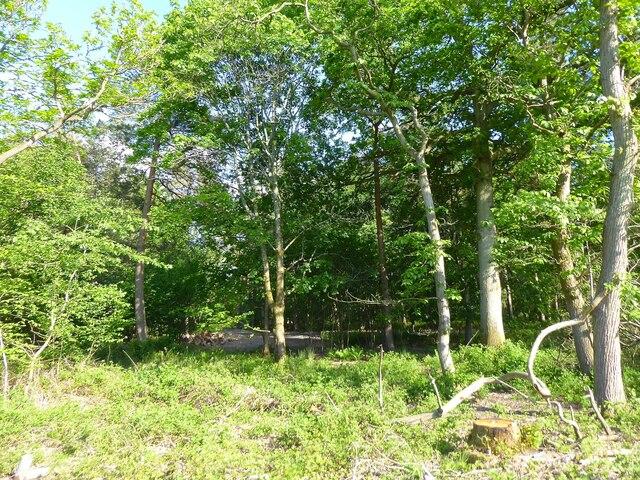 Breckneck Wood