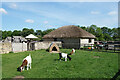 SP3609 : Goats at the Farm Museum by Des Blenkinsopp