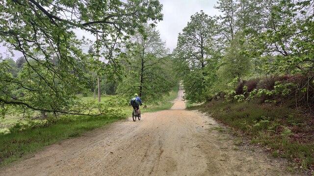 Swinley Forest - Track towards Lower Star Post