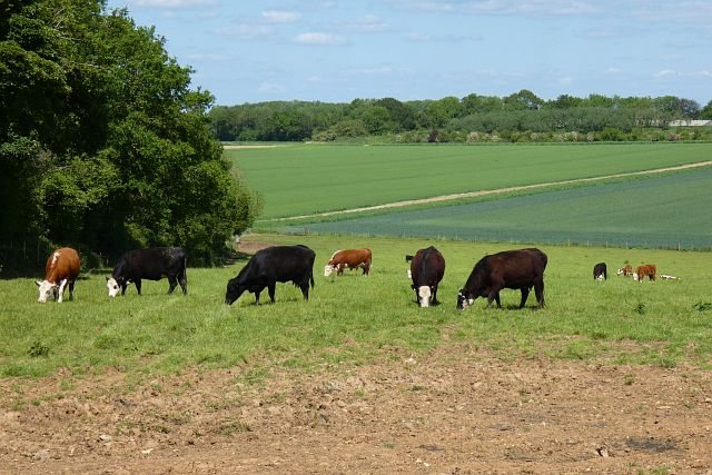 Pasture, Upton Grey