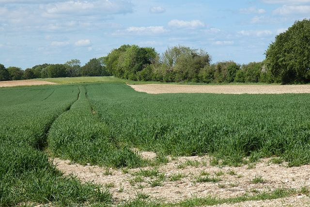 Farmland, Upton Grey