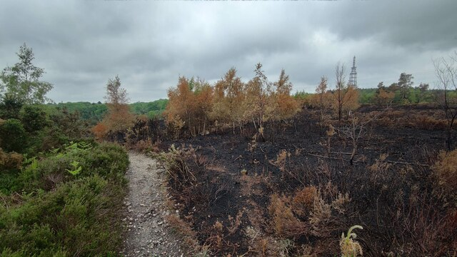 Fire damage on Bagshot Heath