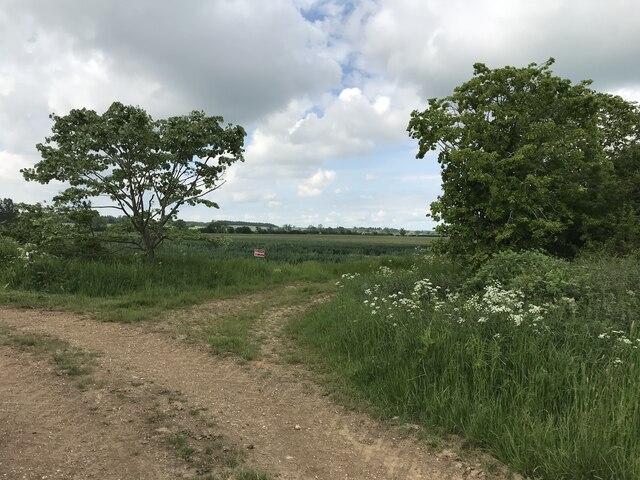 Bridleway near Downton
