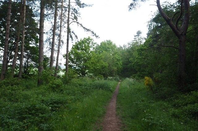 Path near Sod Wall Plantation
