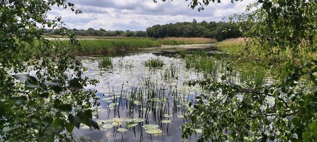 Noah's Lake at Shapwick Heath National Nature Reserve