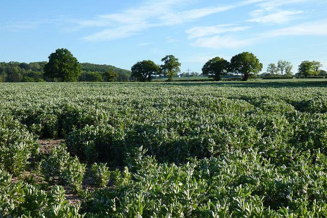 Farmland, Binsted
