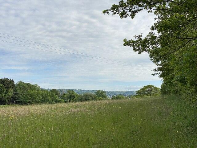 Meadow near Gwynfryn