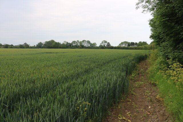 Field by Colchester Road, West Mersea