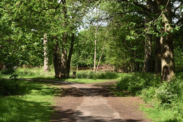 Footpath in North Cray Wood