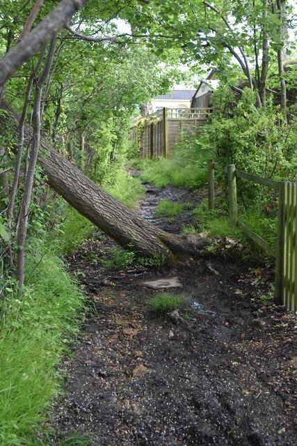 Narrow footpath on edge of Joyden's Wood