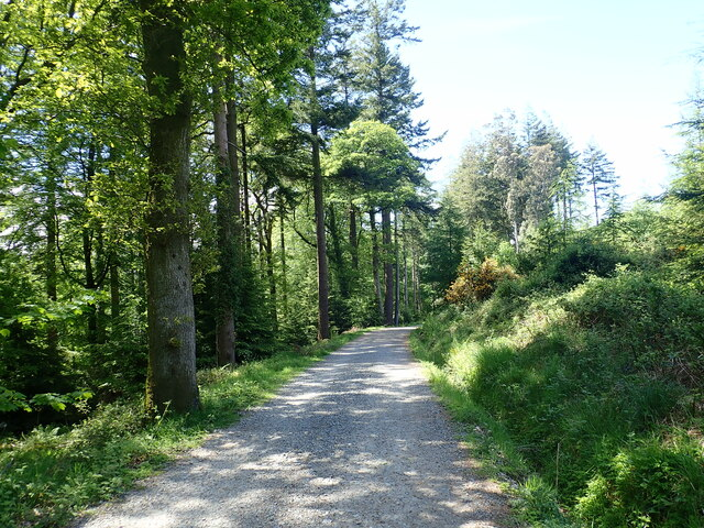 Forestry road serving the north-western boundary area of Tollymore Forest Park