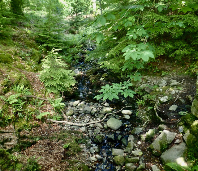 Unnamed tributary of the Shimna viewed from the bridge on the main forest road