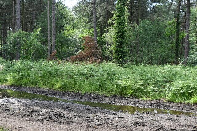 View across track into Joyden's Wood