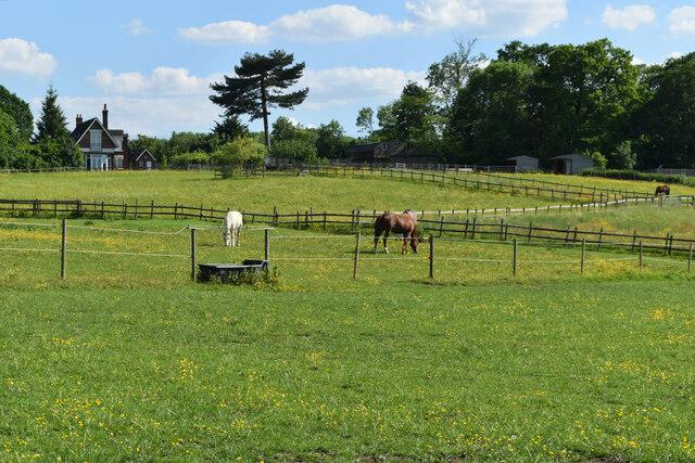 Horses at North Cray