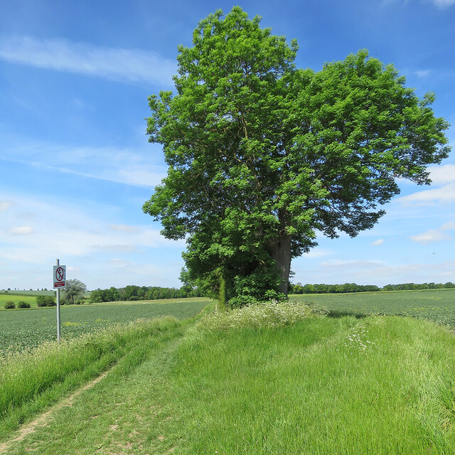 On Whitwell Way in early summer