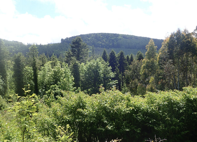 The wooded slopes of The Drinns from the Tollymore Arboretum