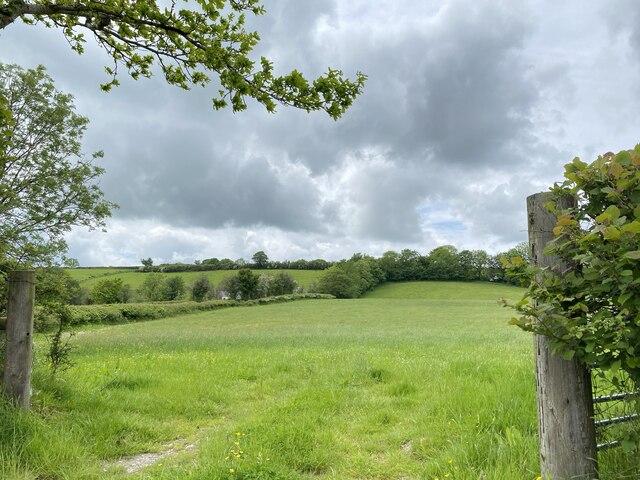 Pasture at Penrhiw Geingen