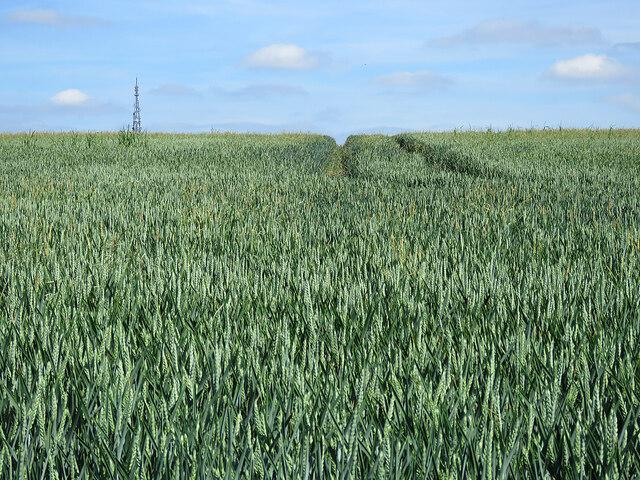 Wheatfield, antenna, sky