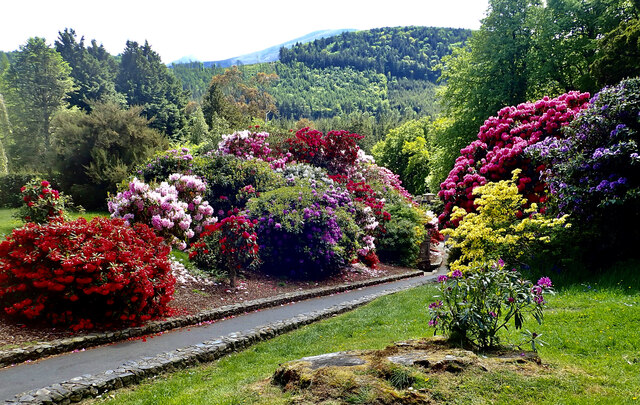 Flowering shrubs and trees in the estate's former Pleasure Grounds
