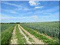 TL3958 : Wheatfields by Whitwell Way in early summer by John Sutton