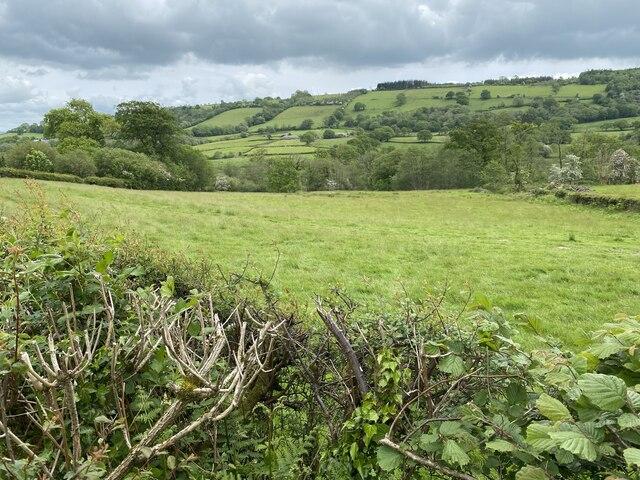 Grassland near Capel Hir