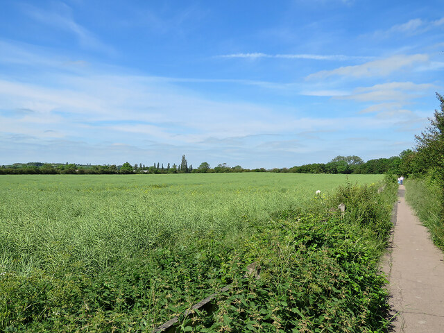 Oilseed rape by the Coton Path