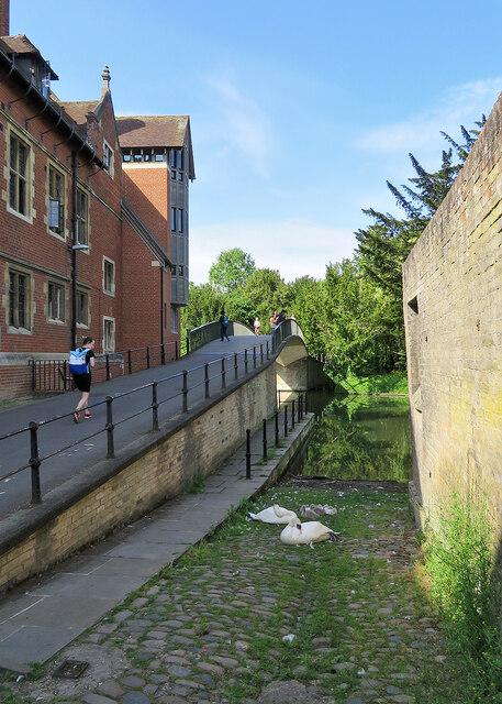 Slipway, sleeping swans and cygnets and Garret Hostel Bridge