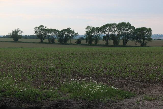 Field by East Road, East Mersea