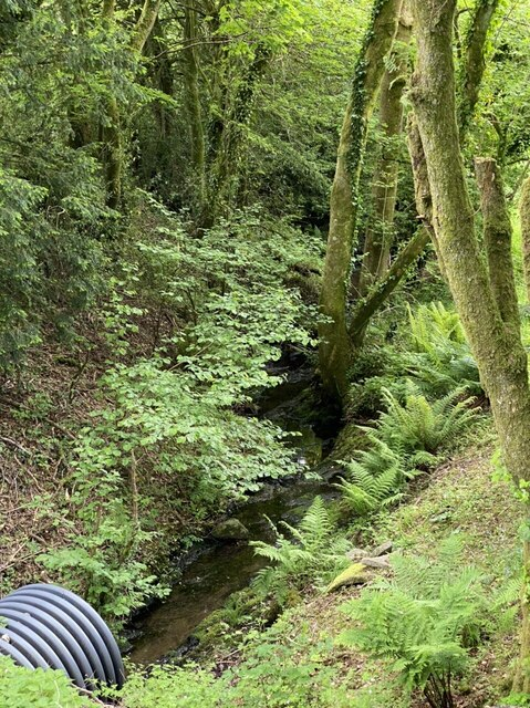 Discharge pipe into a woodland stream