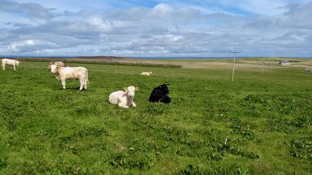 Pasture at Breckan