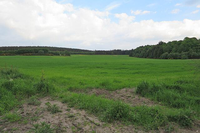 Field at Castlehill