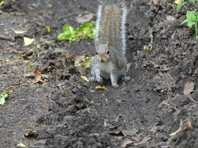 Friendly Squirrel by the Roadside