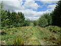 NS7911 : Southern Upland Way passing through a plantation on Sanquhar Moor by Alan O'Dowd