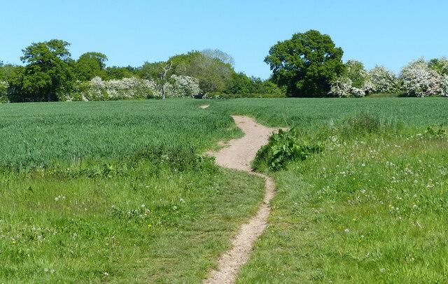 Path across the farmland