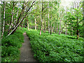 SE1223 : Bracken in Cromwell Wood, Southowram by Humphrey Bolton