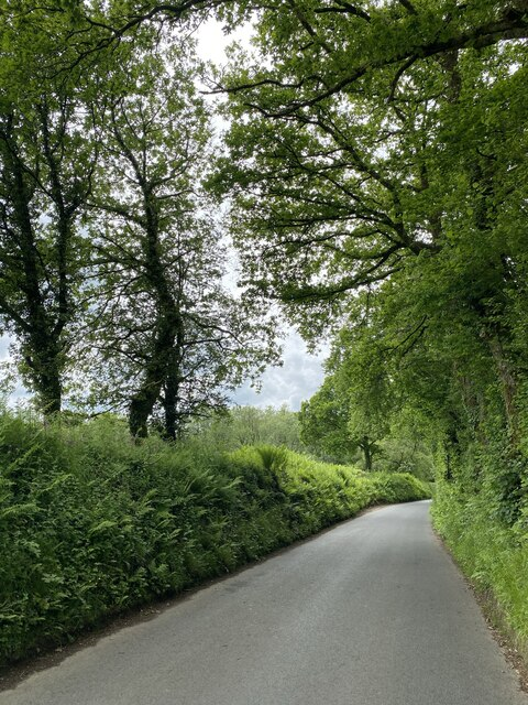 Country lane to Cilwern