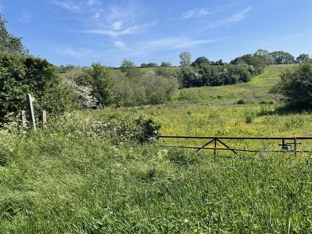 Fields by Moor Lane