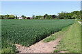 SO8389 : Cereal cropfield near Highgate Common in Staffordshire by Roger  Kidd