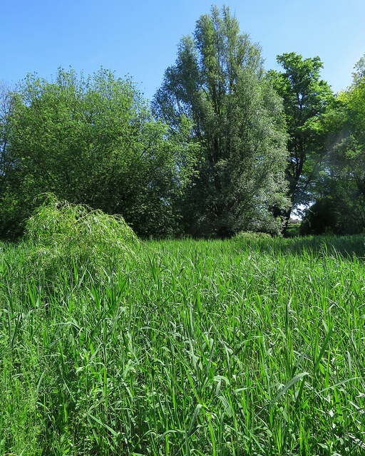Fulbourn: across the horse pond in June