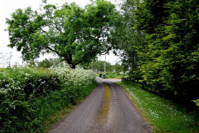 Trees along Lisboy Road