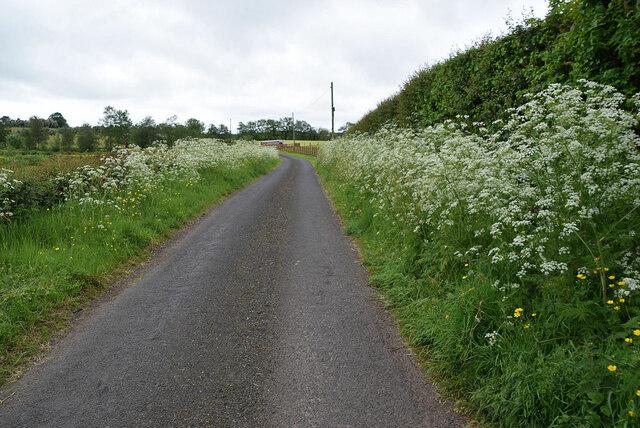 Lisboy Road