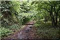 TQ3960 : Park Road by N Chadwick