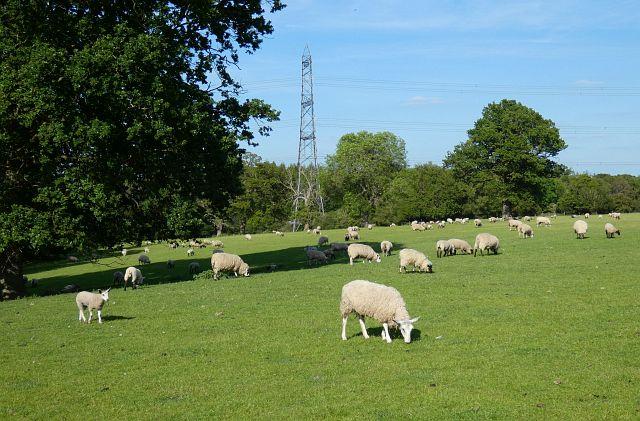 Pasture, Mortimer West End
