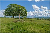 SO3830 : Ewyas Harold Common by Ian Capper