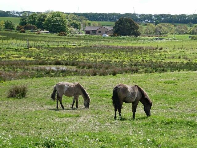 Horses grazing near Starnafin