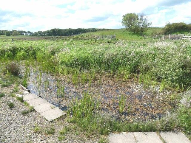 Dipping pond, Strathbeg Loch RSPB reserve