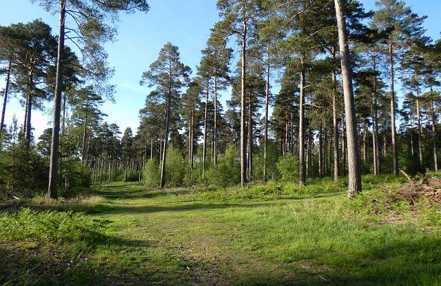Woodland, Ufton Nervet
