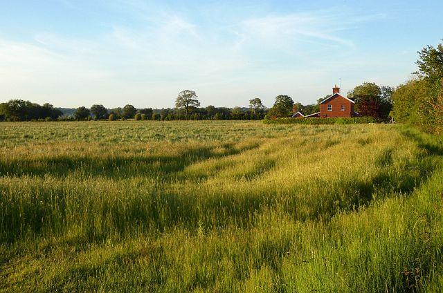 Farmland, Burghfield