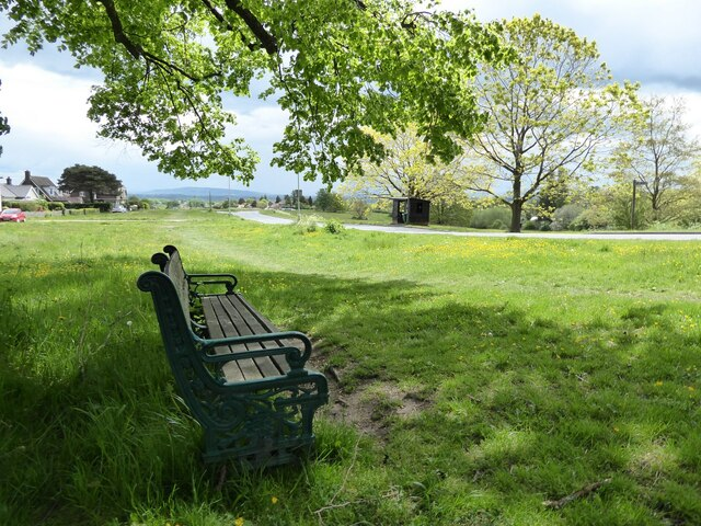 Seat under a lime tree