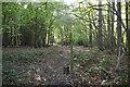TQ8523 : Footpath waymarker, Bixley Wood by N Chadwick
